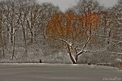Canada-seasons-HDR-3
