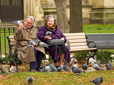 Elderly Couple Feeding Pigeons in the Park