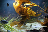 Swirling Kelp