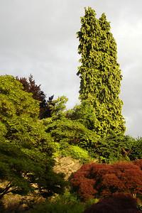Queen Elizabeth Park - Vancouver, BC ... June 24, 2007 ... Photo by Rob Page III