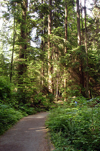 Walking through Stanley Park - Vancouver, BC ... June 23, 2007 ... Photo by Rob Page III