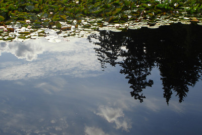 Reflections in Stanley Park - Vancouver, BC ... June 23, 2007 ... Photo by Rob Page III