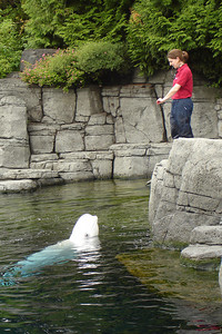 Playing with the Beluga Whale - Vancouver, BC ... June 23, 2007 ... Photo by Rob Page III