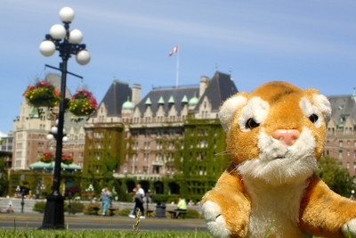 Tora comes out to enjoy the sun in Victoria with the Empress Hotel in the background - Victoria, BC ... June 25, 2007 ... Photo by Rob Page III
