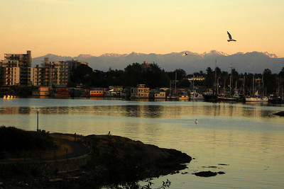 The harbour with the Olympic Mountains in the background - Victoria, BC ... June 25, 2007 ... Photo by Rob Page III
