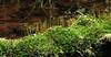 Stream-Side Mosses