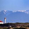 Victoria BC, Bald Eagle, Lighthouse, Trial Island Ecological Reserve, Eagle Wing Whale & Wildlife Tours