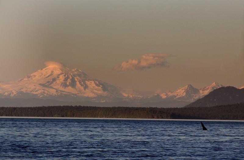 Victoria BC, Victoria BC,  Haro Strait, Eagle Wing Whale & Wildlife Tours