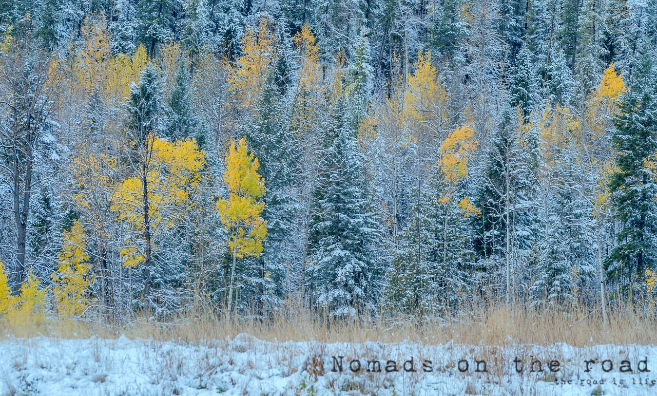 Fall in Fernie, British Columbia
