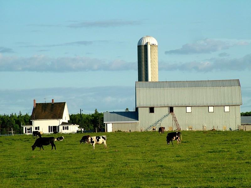 Farm - New Brunswick, Canada