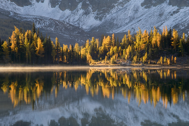 Reflecting Larches