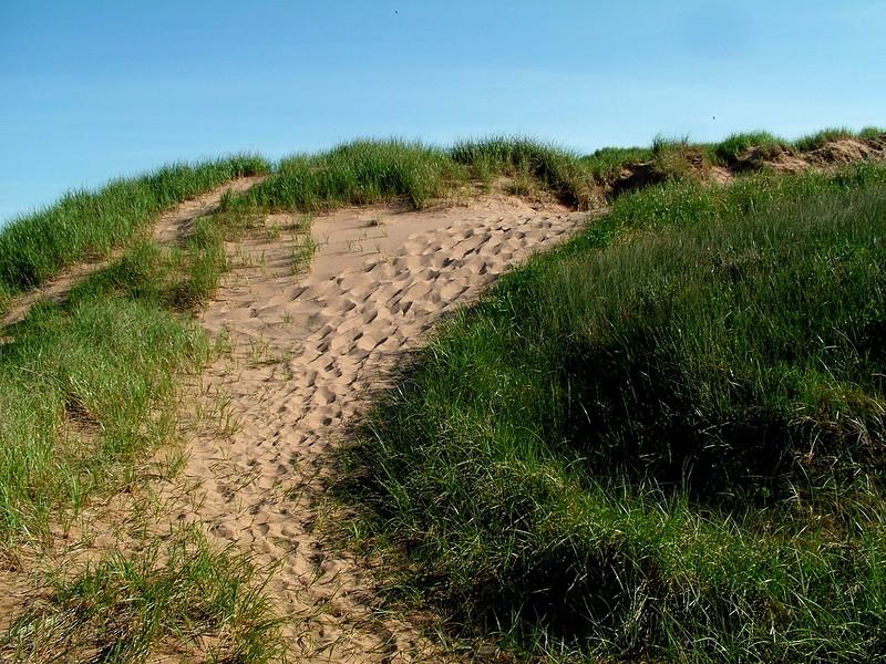 Dune - Cavendish Beach - PEI, Canada