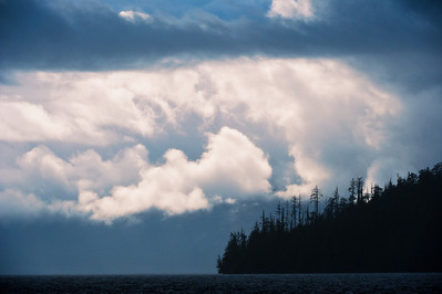 Conifers dominate the temperate rain forest of coastal Britsh Columbia, Canada, known as the Great Bear. With fjords and inlets along the Douglass Chanel (the proposed super-tanker route along Canada's, B.C. coast).