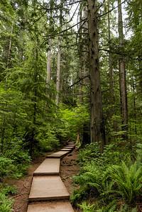Lynn Canyon Park Walkway