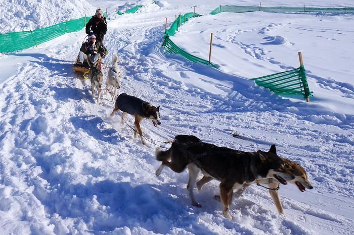 Dog sledding at the Carnaval de Quebec