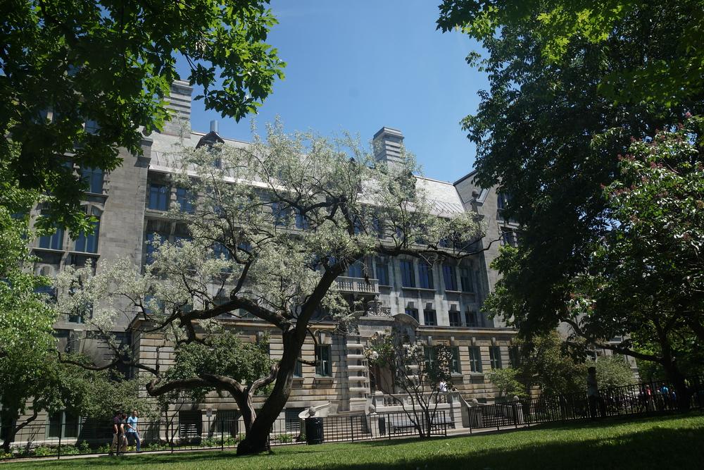 campus area of McGill University - l'Université McGill