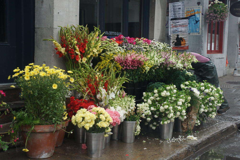 Flowers for sale at the historic area of Old Montreal - Vieux-Montréal
