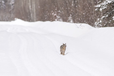 OWL_2680
