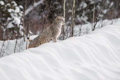OWL_0991