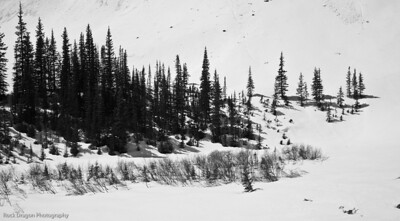 Trees on Cascade Mountain in Banff National Park