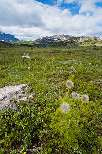 Sunshine Meadows in Mount Assiniboine Provincial Park.