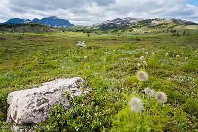 Sunshine Meadows in Mount Assiniboine Provincial Park.