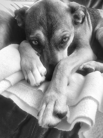 A dog's life ain't always easy....