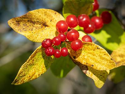 It's berry pickin' season!