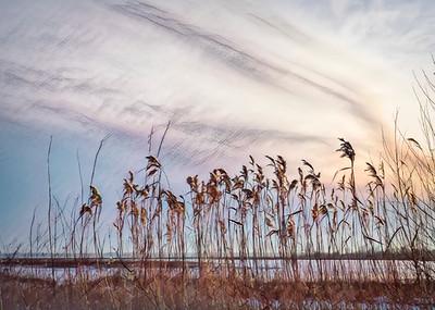 Lake Winnipeg shoreline grasses