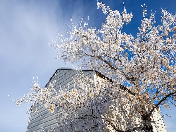 Mid winter hoar frost