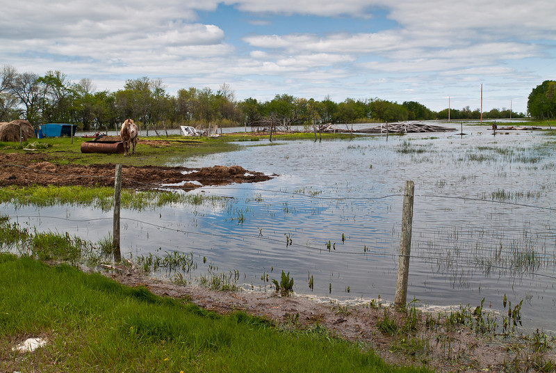 Last year, a beautiful horse pasture. This year, just the horse - the Lake has taken the pasture.