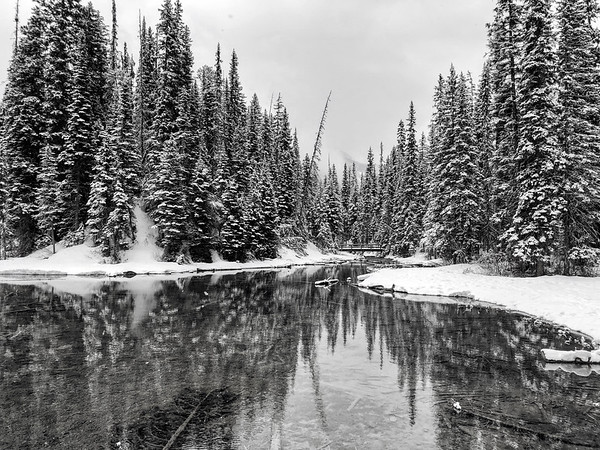 Frozen Pines at Emerald Lake/ B&W