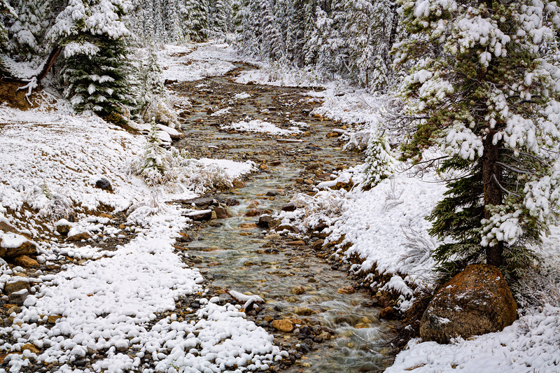 Misquito Creek 2, Banff National Park, Alberta, Canada