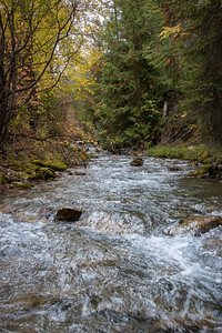 Autumn Stream near Radium Hot Springs