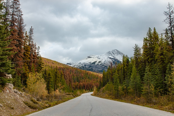 Road to Maligne Lake