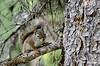 Squirrel_D7K2860