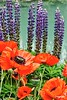 FlowersEmeraldLake_D7K2755