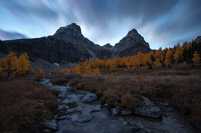 An incredible display of larch trees during fall