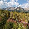 Canadian Rockies Scenic