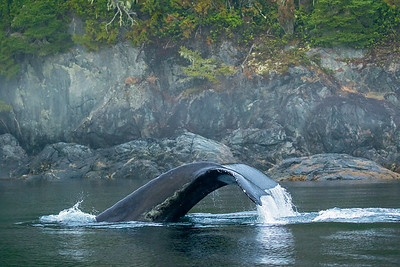 Whale Tail close-up