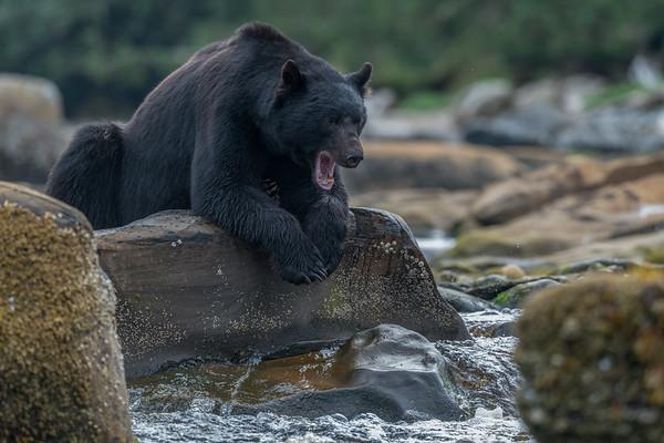 Big yawn.