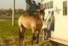 LI2_9899Estevan2011_Slack