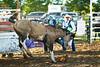 53BG2288MJ_Rodeo_2011_Day2