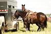 53BG0847Pilot Butte Rodeo 2011