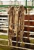 53BG0849Pilot Butte Rodeo 2011