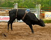 LI4_4415_Moosomin_BullFuturity2