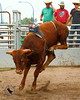 LI4_4427_Moosomin_BullFuturity2