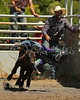 LI4_6576_Moosomin_KidsRodeo2018_final