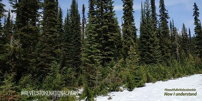 The landscape (Mt. Revelstoke National Park)