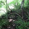 Beaver_Brook Aqueduct1 5-31-11